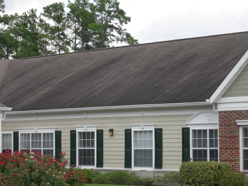 algae, mold, roof
