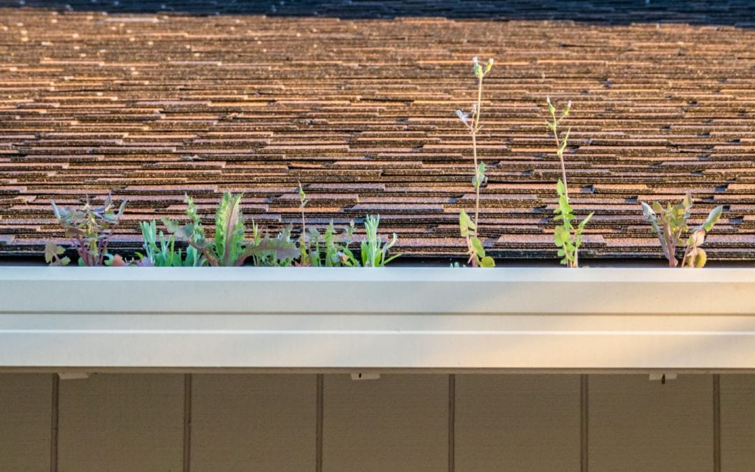7 Ways Clogged Gutters can Damage Your Roof